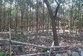 Bán đất tại xã Đông Xuân Quốc Oai Hà Nội diện tích 11158m2