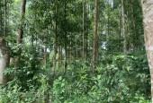 Thanh lý gấp lô đất tại huyện Kỳ Sơn TP Hòa Bình