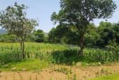 Bán đất view tuyệt đẹp tại Lương Sơn