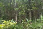 Bán đất Kim bôi Hòa BÌnh DT 40ha toàn bộ là rừng sản xuất giá đầu tư.