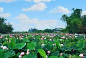Bán đất Tân Xã, Thạch Thất tổng 902m có 280m thổ cư nằm trong nỏi khu CNC gía rẻ cho các nhà đầu tư,