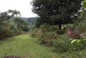 Bán 1129m đất thổ cư nghỉ dưỡng, đầu tư tại Yên Bài, Ba Vì giá rẻ