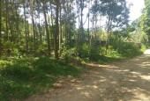 Bán đất Lương Sơn dt 6200m có 3000m thổ cư tại Cao Dương ,đất đẹp vuông đường rộng