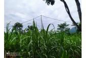 Cần bán lô đất nhỏ nhỏ xinh xinh rộng 700m2 có 200 tc tại Hợp Phong Cao Phong Hòa Bình. View siêu thoáng. 399tr