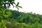 LÔ ĐẤTSIÊU ĐẸP  8000M CÓ KHOÁNG NÓNG CỰC HIẾM TẠI KIM BÔI - HÒA BÌNH - GIÁ TỐT NHẤT KHU VỰC
