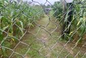 Bán đất Cao Phong Hoà Bình DT 2125m full đất ở gần các khu tiện ích giá đầu tư